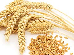 What Causes Celiac Disease
